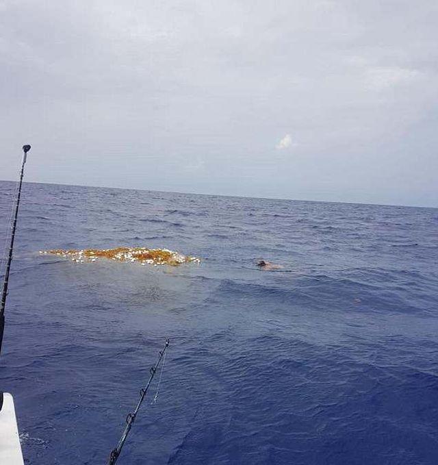 Дайвер обнаружил потерянную рыболовную сеть, погубившую десятки животных (4 фото)
