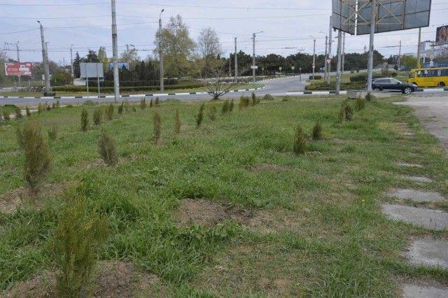 В Севастополе похитили деревья с аллеи в память о жертвах пожара в Кемерово (3 фото)