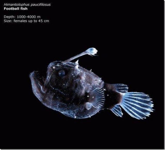 Живые организмы, обитающие в Марианской впадине (17 фото)