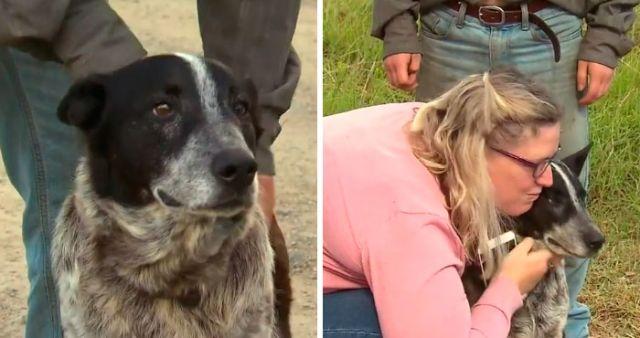 В Австралии пес спас 3-летнюю заблудившуюся девочку (6 фото)