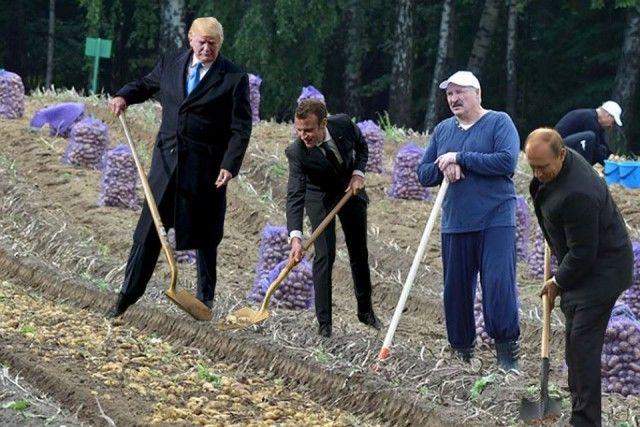 Сажающие дерево Трамп и Макрон стали героями фотожаб (41 фото)