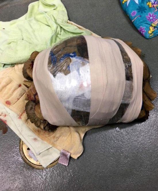 Спасение пострадавшей черепахи (6 фото)