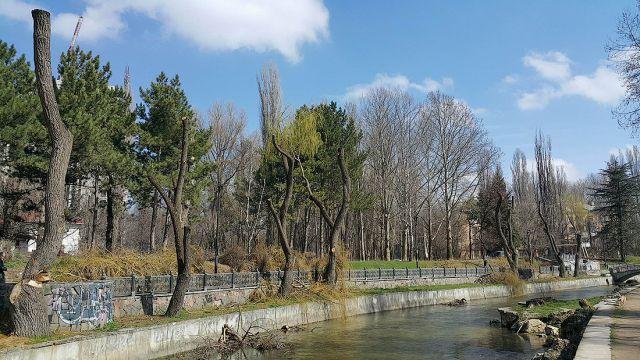 Деревья-обрубки из российских городов (15 фото)