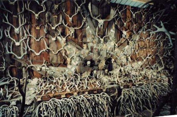 Американец собрал внушительную коллекцию рогов животных (7 фото)