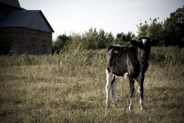 Лето в деревне (35 фото)