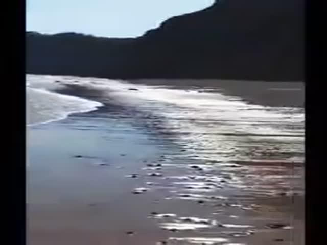 Экстренная посадка на пляже