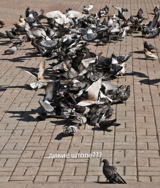 Подборка картинок. Дневной выпуск (24 фото)