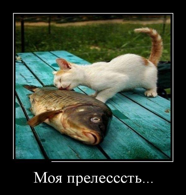 demotivatory_24.jpg