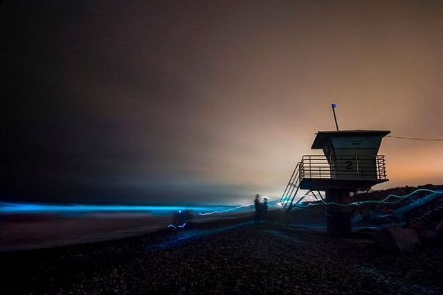 В Калифорнии океан стал светиться голубым цветом (8 фото)