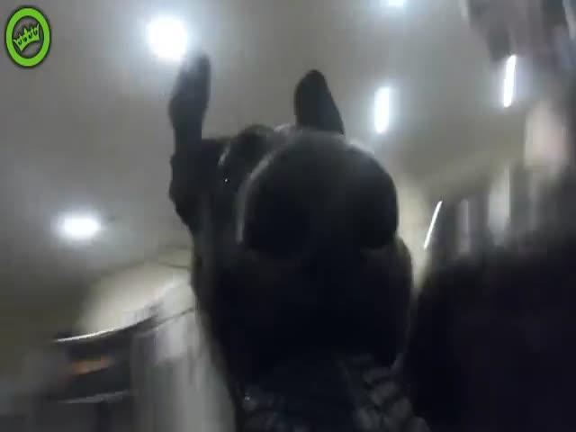 Пес снял забавное видео с погоней