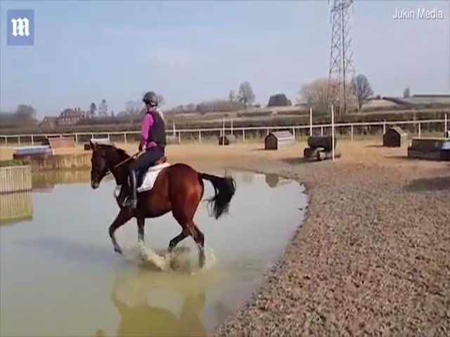 Лошадь зрелищно избавилась от наездника