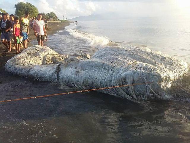 Лохматое существо выбило на берег Филиппин (6 фото + видео)