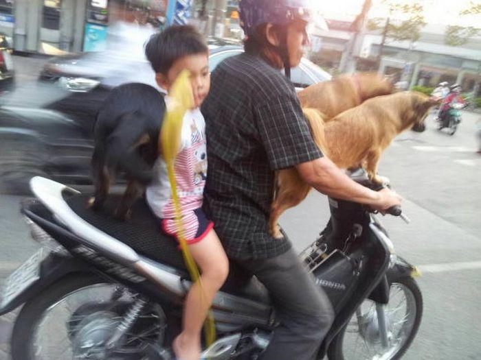 Странные снимки из Азии (42 фото)