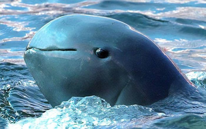 Странные и удивительные животные (40 фото)