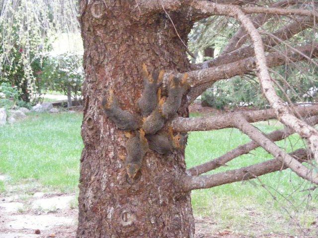 В Небраске зоозащитиники спасли шесть бельчат, оказавшихся в ловушке (3 фото)