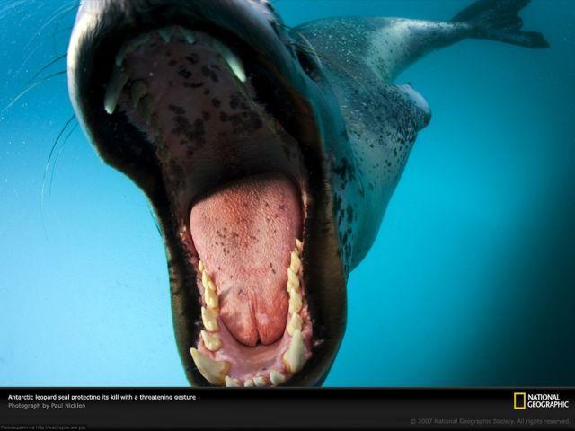 Узнаете ли вы опасного хищника? (3 фото)