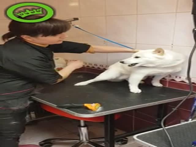 Девушка успокоила агрессивную собаку