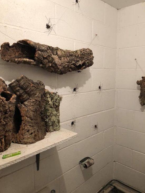 Туалет из кошмарных снов (5 фото)