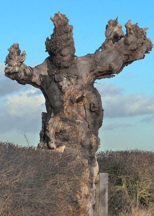 Удивительные формы природы (45 фото)
