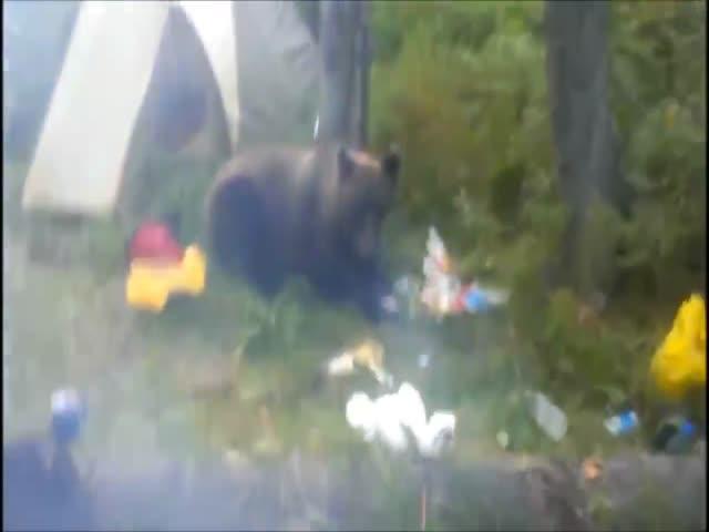 Медведь полакомился продуктами туриста