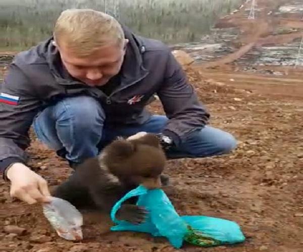 Потерявшийся медвежонок
