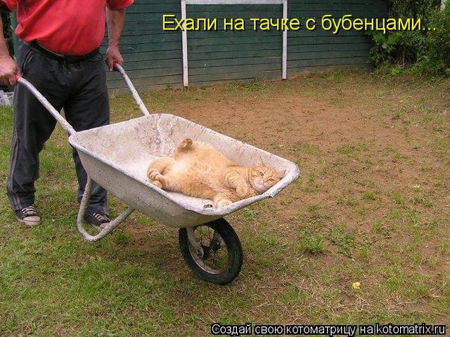 Лучшие котоматрицы недели (50 фото)