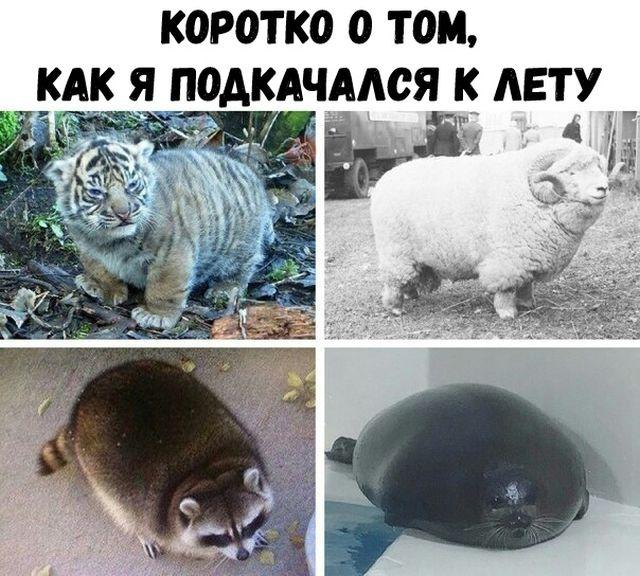 http://trinixy.ru/pics5/20180612/kartinki_06.jpg
