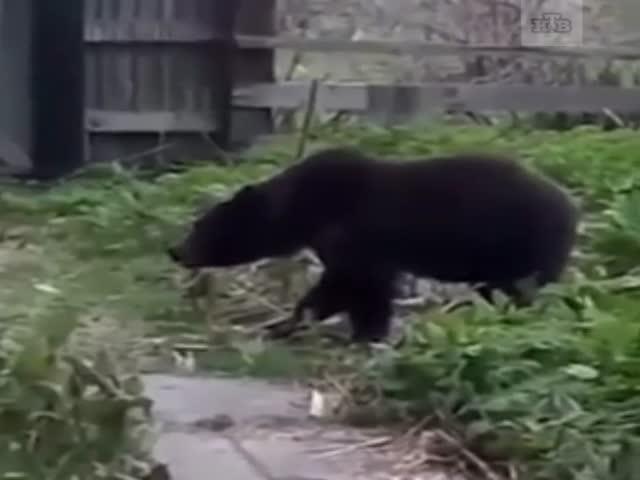 Жительница Сахалина прогнала медведя