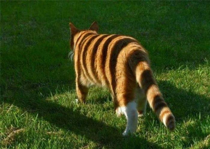 Обман зрения и оптические иллюзии (34 фото)