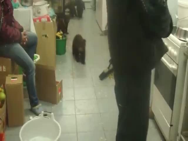 Толпа медвежат безобразничает на кухне