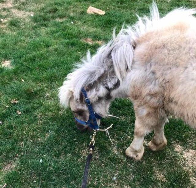 Спасение лошадей, живших в болоте за колючей проволокой (10 фото + видео)