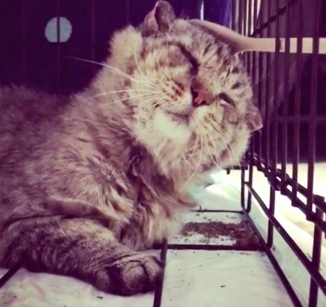 10-летний уличный кот нашел себе новый дом (10 фото)