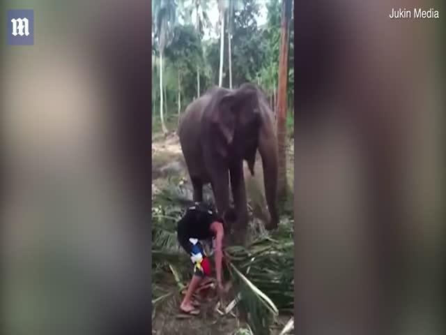 Не нужно было прикасаться к хоботу слона