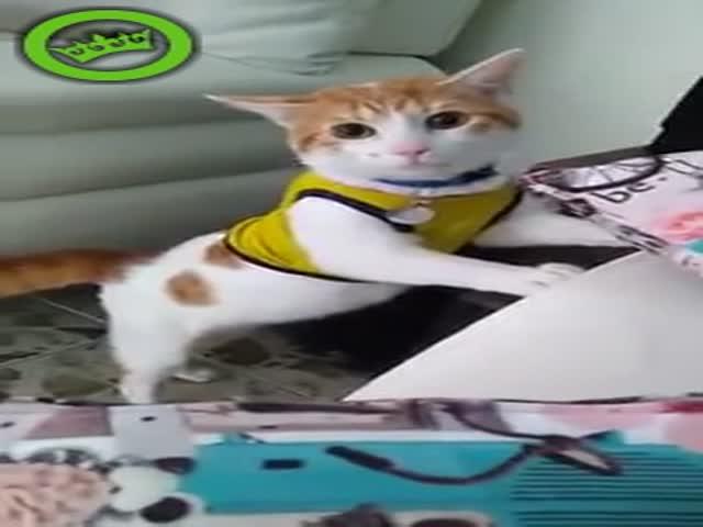 Кот настоящего футбольного болельщика