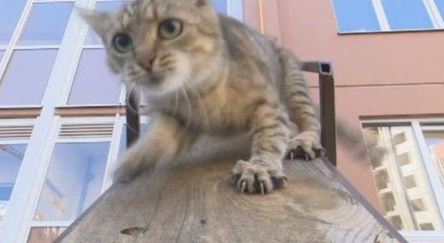 Кот получил свой персональный вход в одну из квартир в многоэтажке (3 фото)