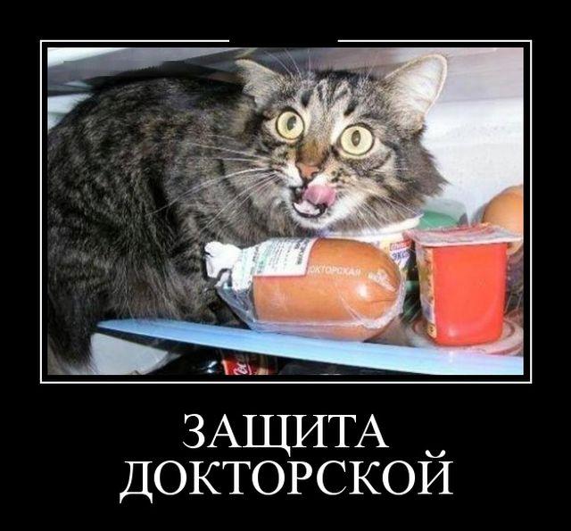 Веселые картинки Demotivatory_01