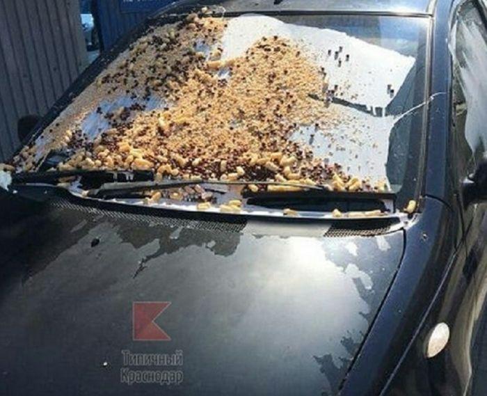 Жестокое наказание за неправильную парковку в Краснодаре (3 фото)