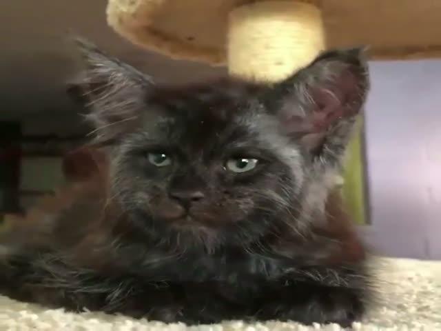 Котик с человеческим лицом