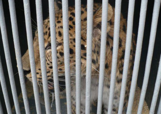 Гражданка России пыталась нелегально ввезти в Алтайский край экзотических животных (5 фото)