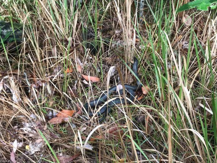 Попробуйте обнаружить змею на снимке (4 фото)