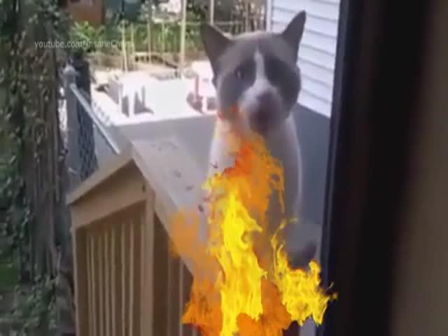 Кавер на песню группы Rammstein в исполнении животных