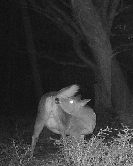 Странные снимки животных, сделанные при помощи фотоловушек (31 фото)