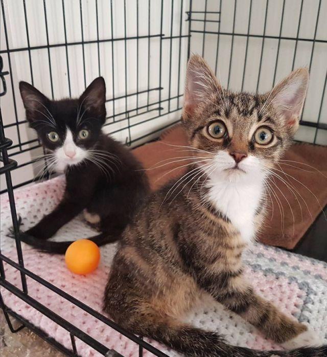Фрог и Ньют – котята с врожденной аномалией (6 фото)