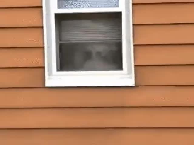 """Вот, что значит """"собака на охране"""""""