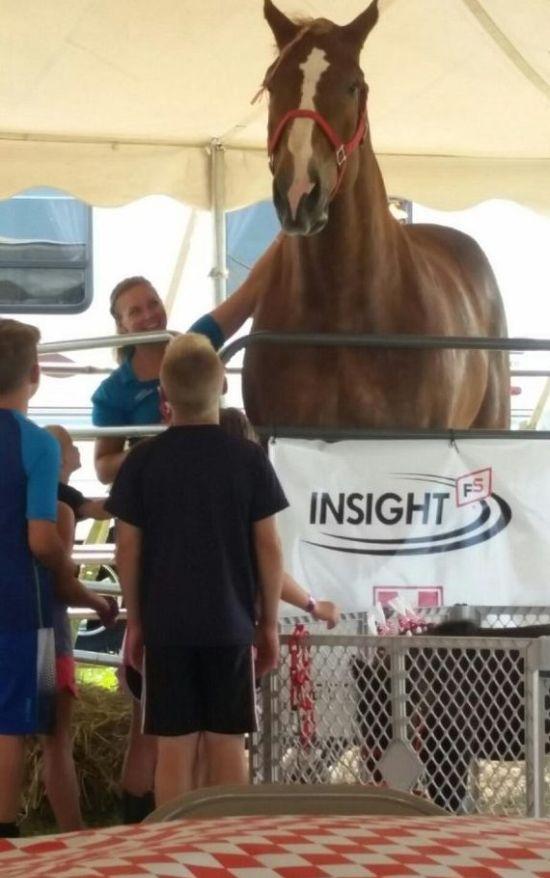 Большой Джейк - самая высокая лошадь в мире (6 фото)