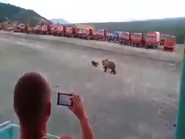 Медведь решил зайти в гости к вахтовикам