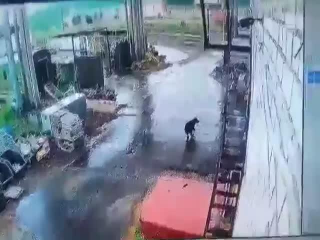 Медведь погнался за работником железнодорожного депо