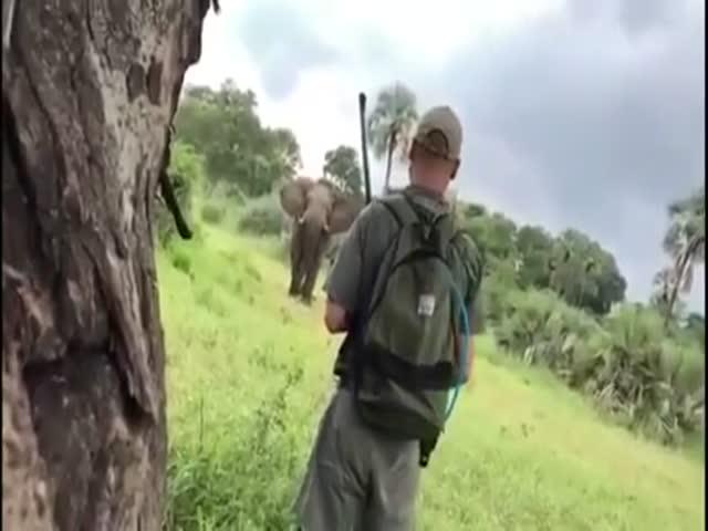 Бесстрашный охотник и разъяренный слон