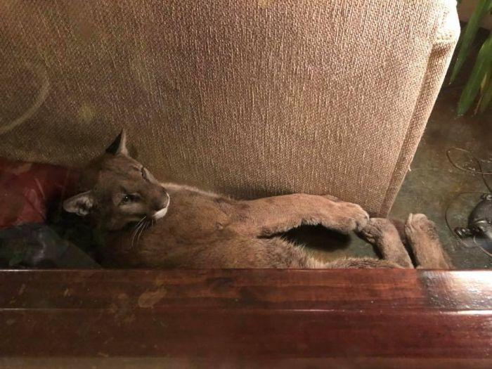 Девушка обнаружила в своем доме незваного гостя (8 фото + 2 видео)
