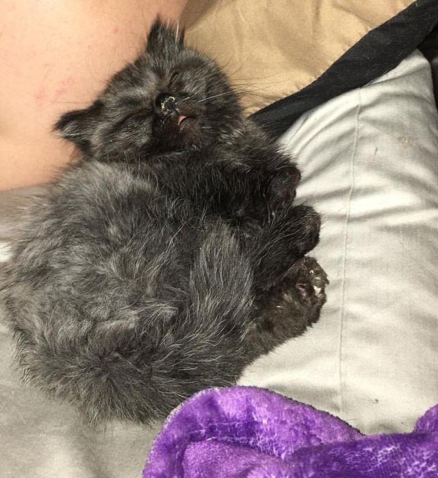 Необычный котенок-карлик, обнаруженный в лесу (6 фото + видео)